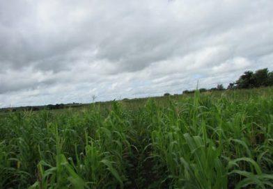 Com apoio da Prefeitura, agricultor terá boas colheitas